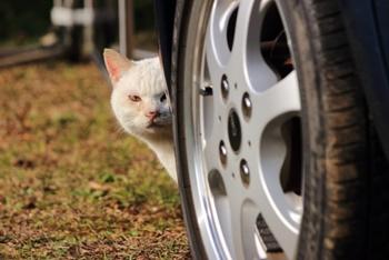 猫の糞が芝生の上にドカンと!対策としてコーヒーかす使った結果…