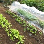 畑の土の作り方⇒固い土をふかふかにするには?腐葉土投入毎年必要?