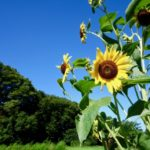 大暑の候の読み方・意味は意外に間違いやすい?時期も簡単に解説