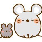 ネズミの尻尾が長い、毛がない理由が予想外!また切れると死ぬってホント?