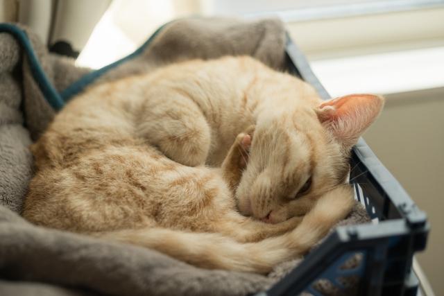 猫が発情期でご飯食べないのは何日まで大丈夫?食欲ない原因はこれかも。