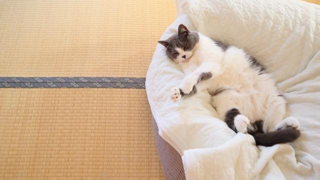 猫の発情期に液体や血便血尿が出るのは何かの病気?原因と対処法を解説